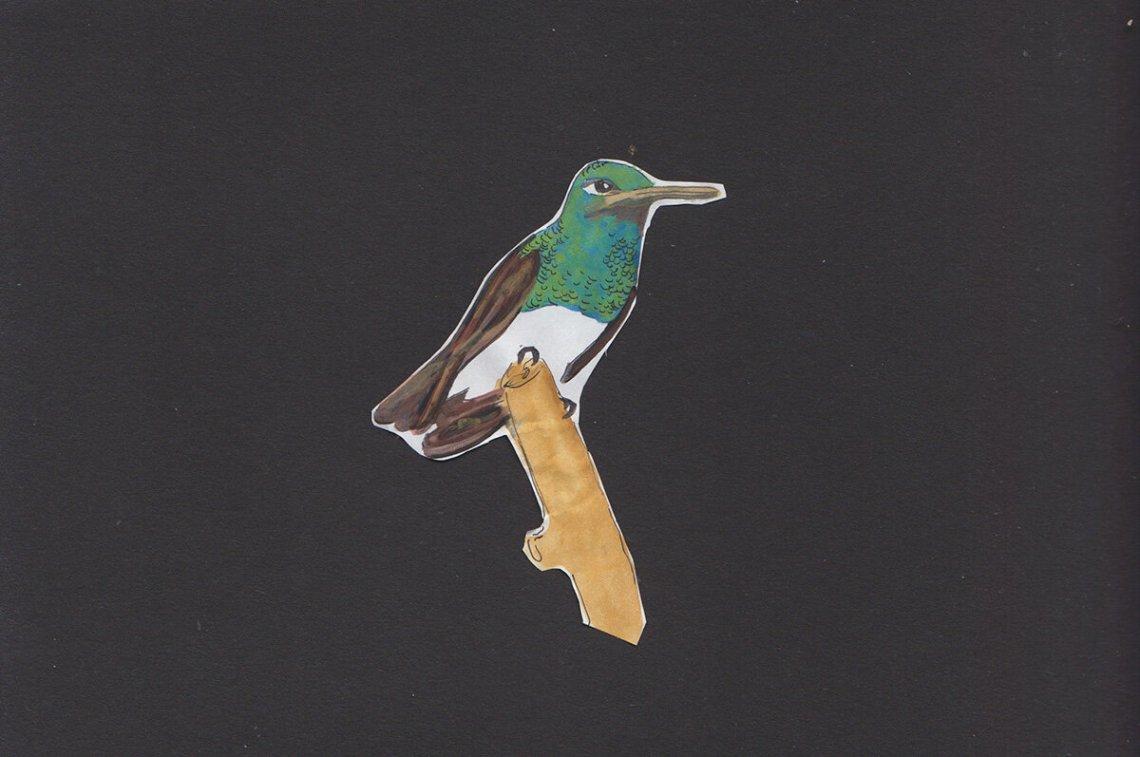 Ilustraciones de Ani M. Ventocilla King