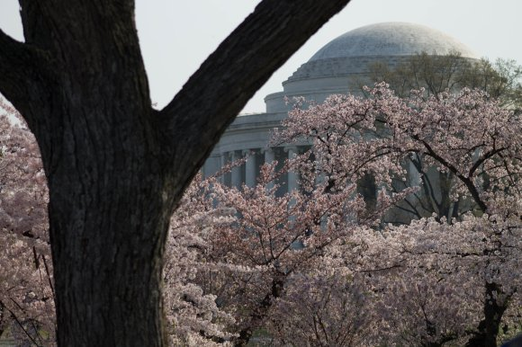 2014-04-13_Cherry_Blossons_and_Evening_Downtown-20140413-IMG_8832.jpg