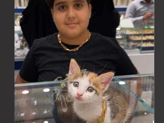 .a cat with class.jpg