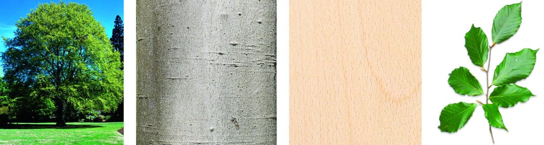 arbres-produits-scieriedionetfils-hetre2.jpg