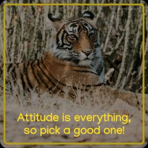 Attitude Images Attitude is everything so pick a good one full HD free download.