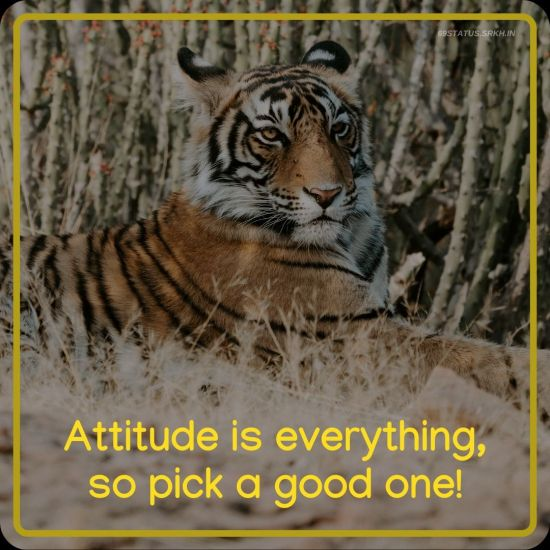 Attitude Images – Attitude is everything, so pick a good one