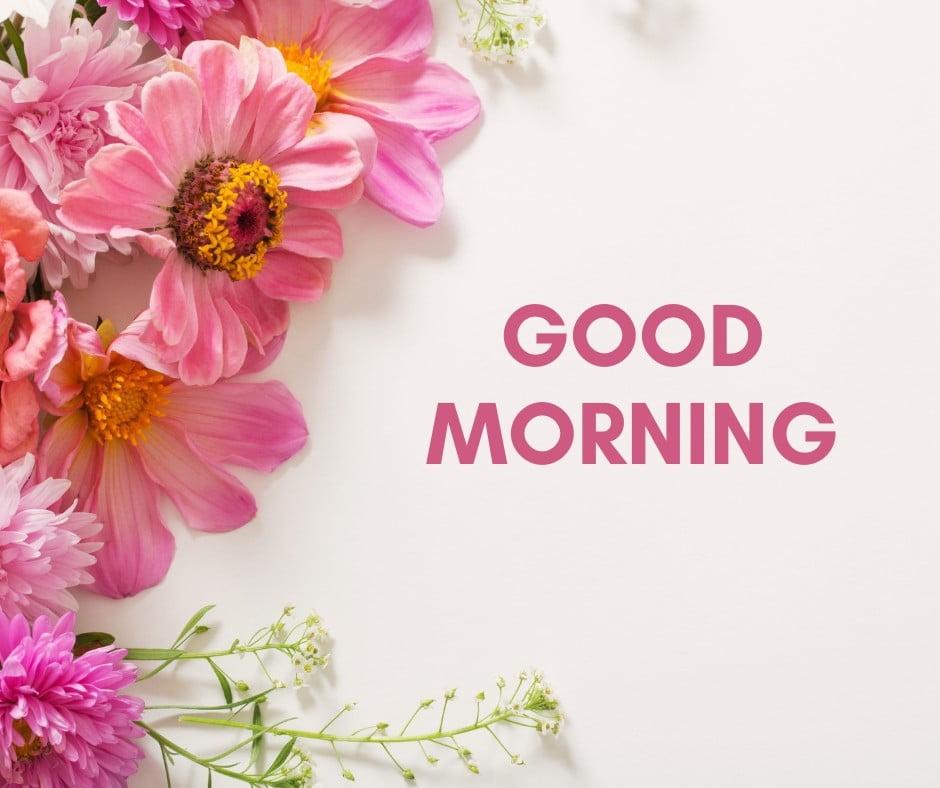 Flower Good Morning Image full HD free download.