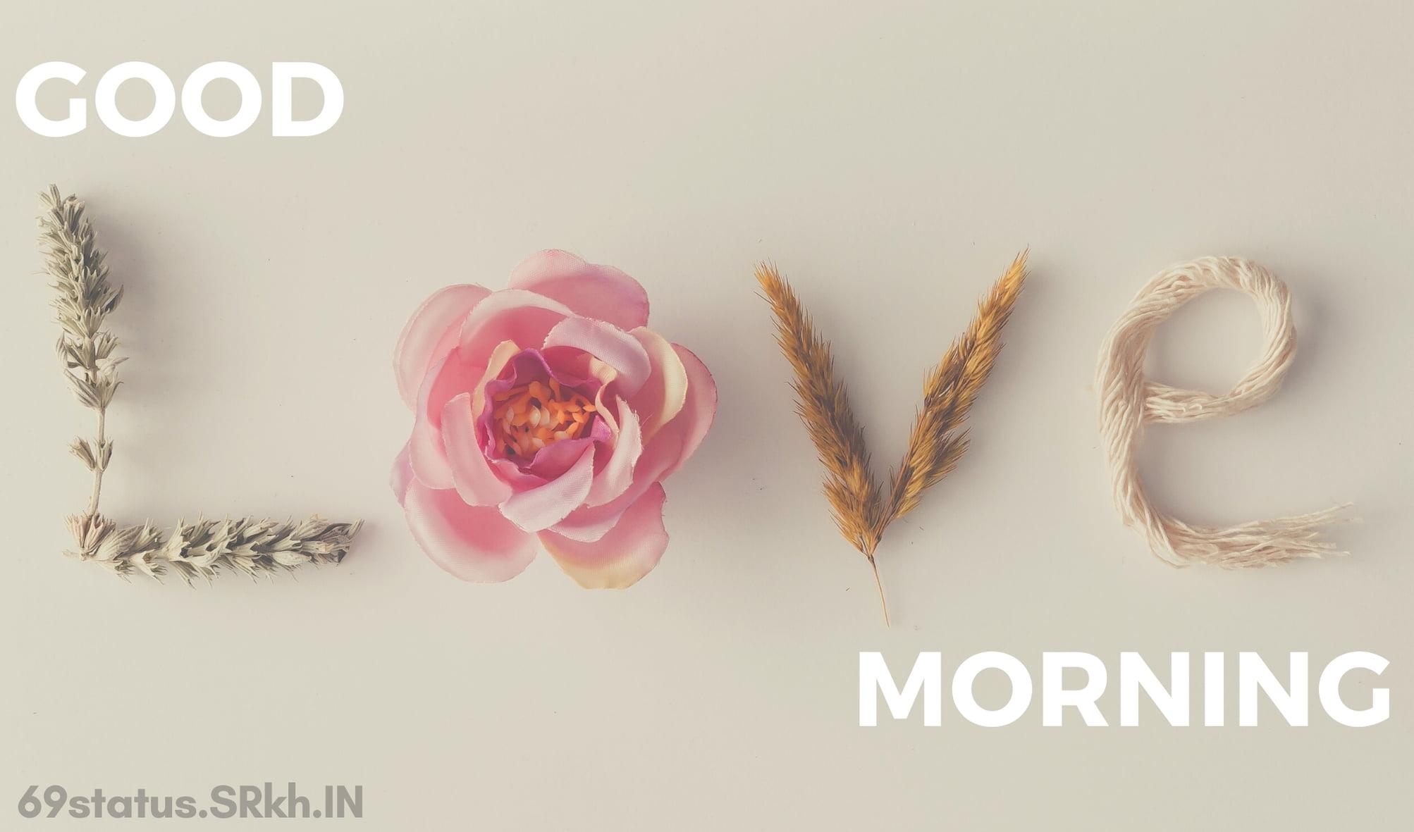 Good Morning Romantic Love Rose Image full HD free download.