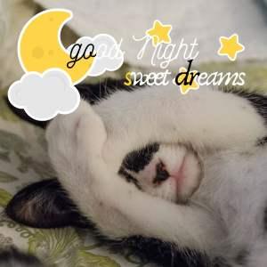 Good Night Sweet Dreams images hd full HD free download.