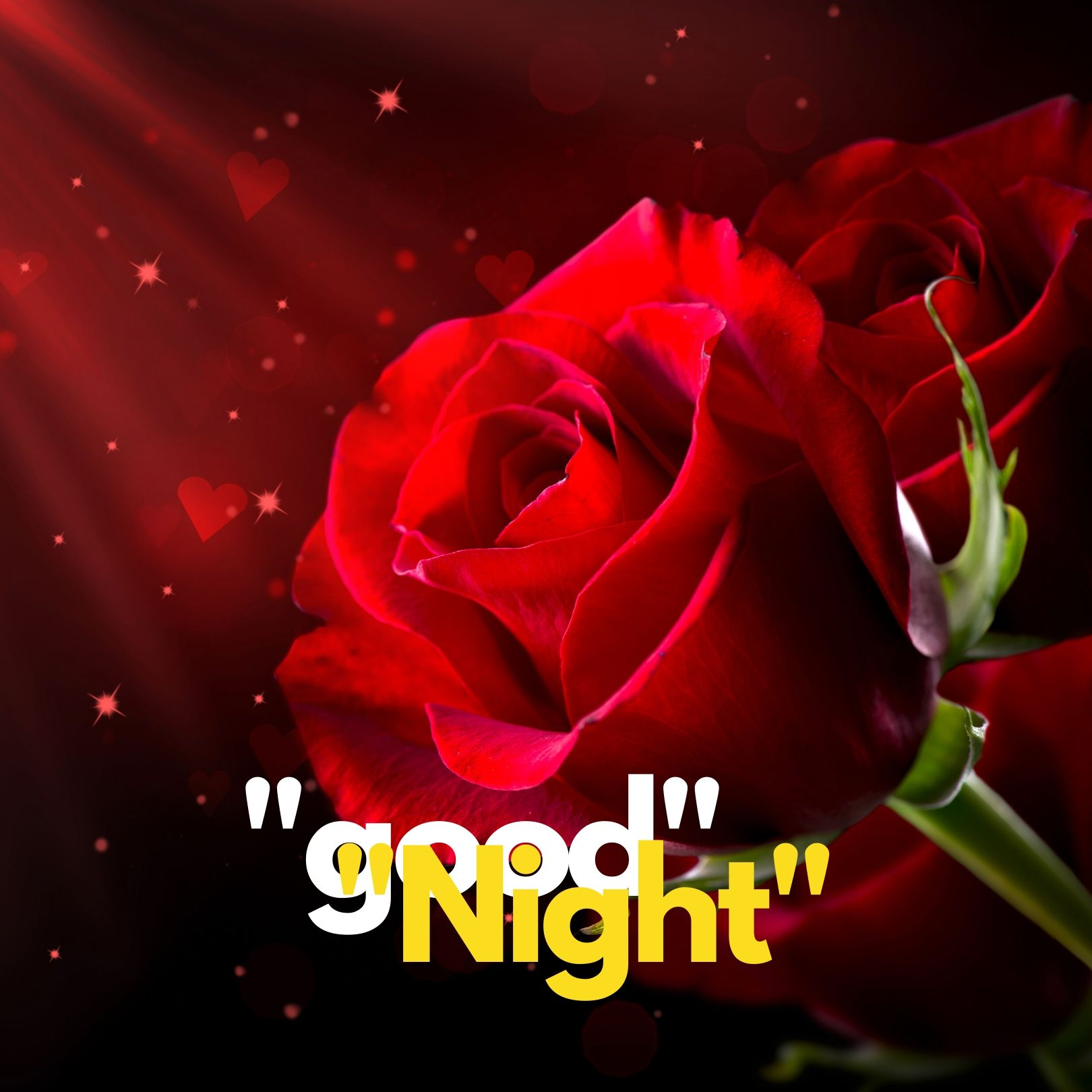 Good Night rose pic hd full HD free download.