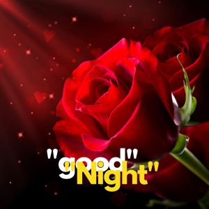 Good Night rose pic hd full HD free download.