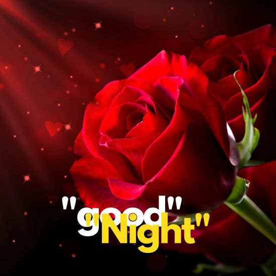 Good Night rose pic hd