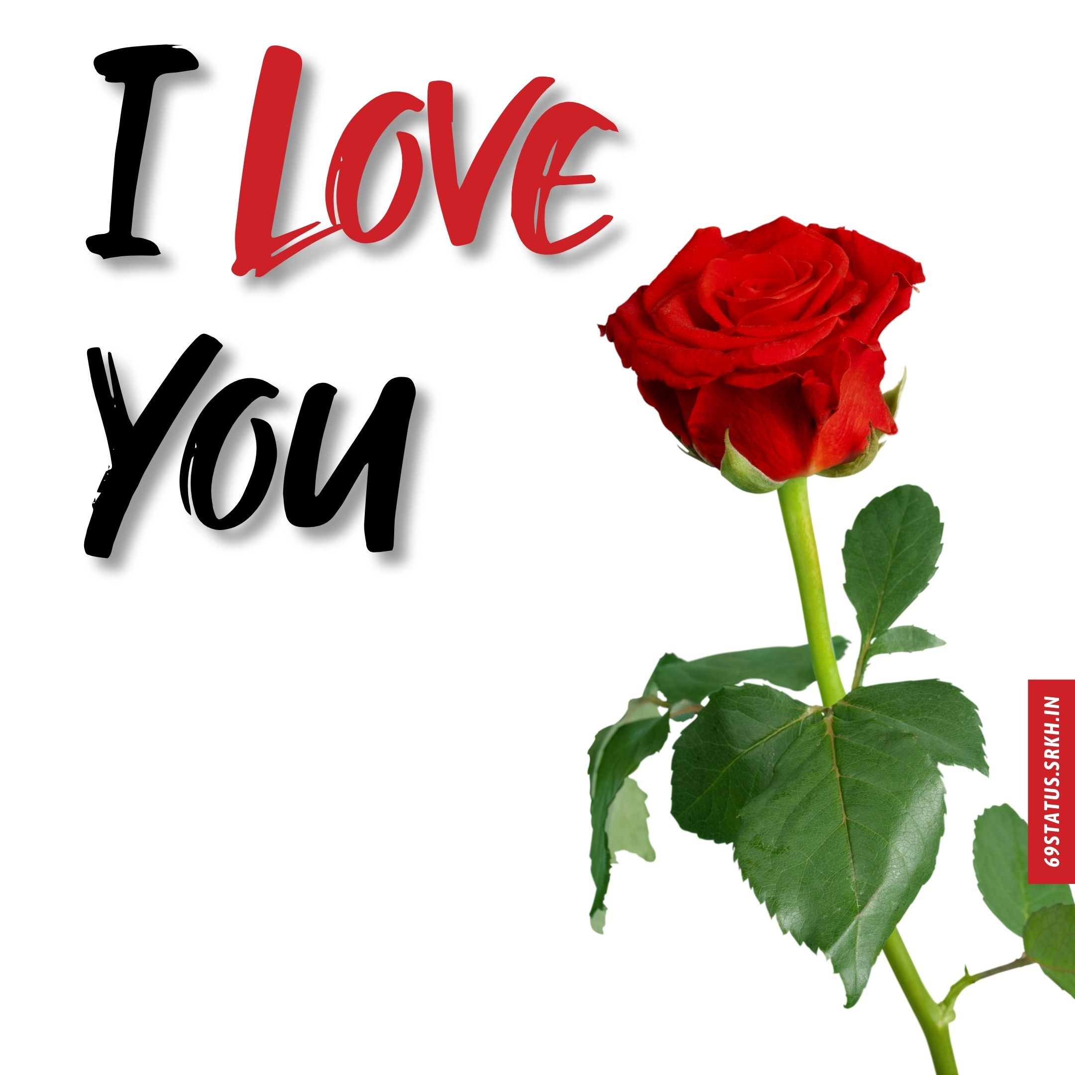 Rose images with I Love You full HD free download.