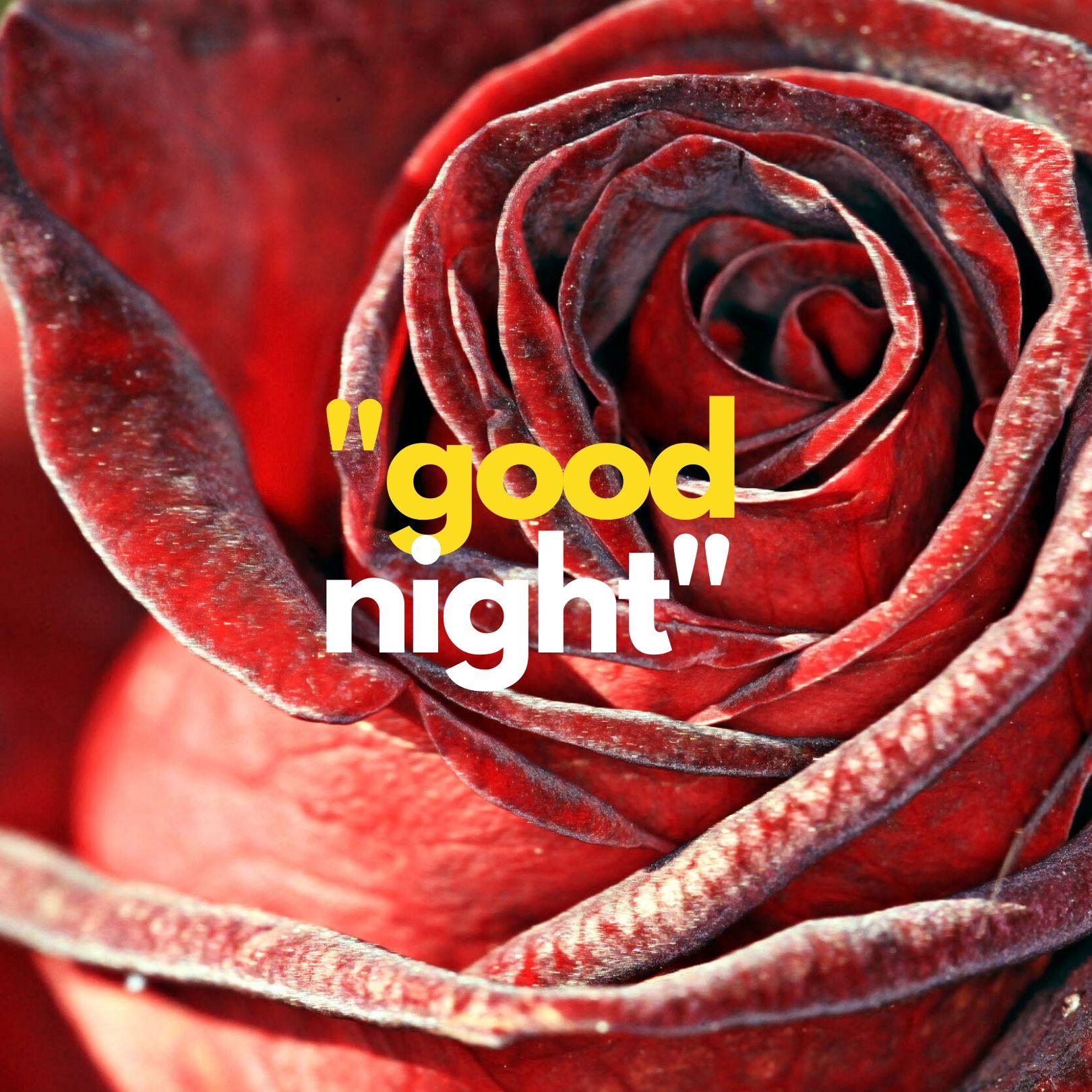 Sweet rose Good Night image full HD free download.
