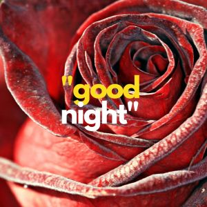 Sweet rose Good Night image full HD free download.