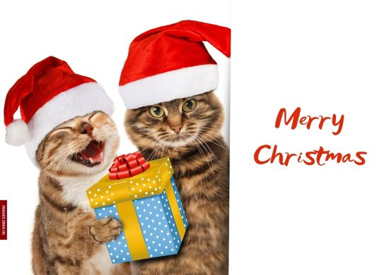 Best Christmas Images