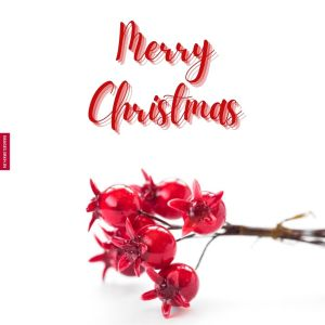 Christmas Flowers Images full HD free download.