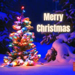 Images Of Christmas Tree full HD free download.