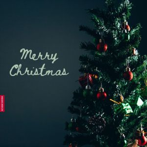 Merry Christmas Tree Images full HD free download.