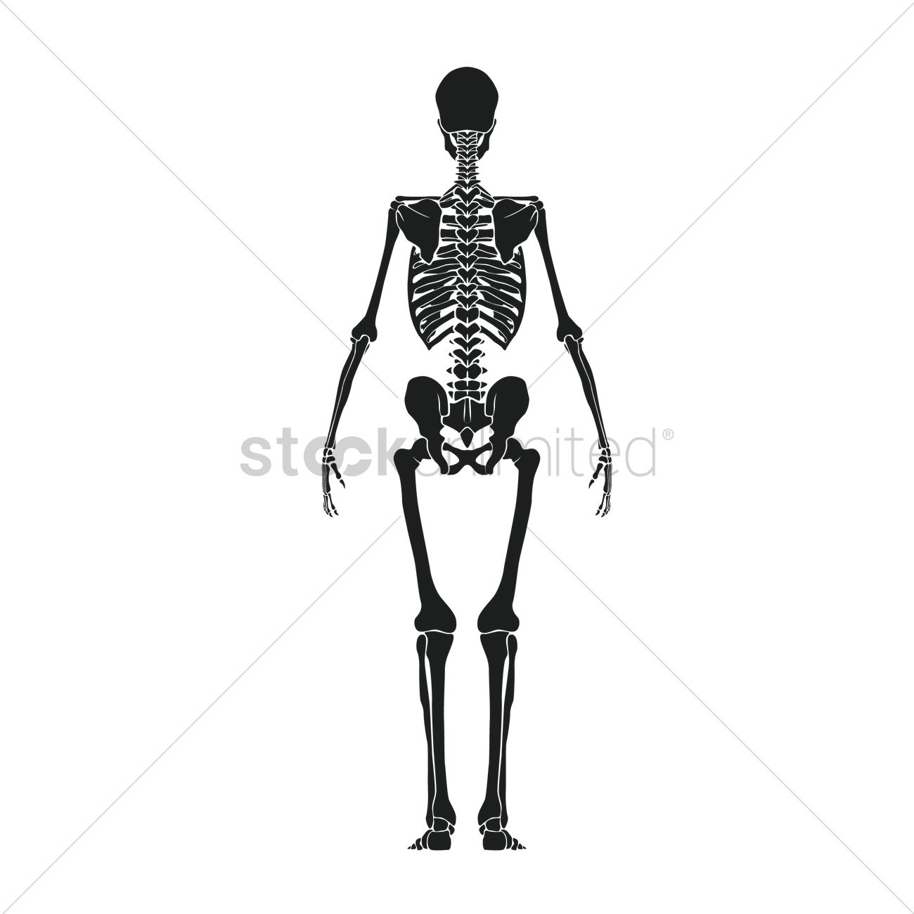 Human Skeleton Vector Cultuafo