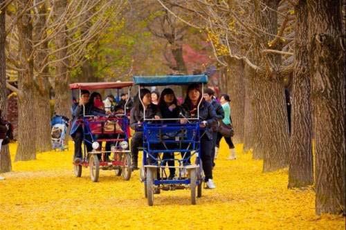 Hàn Quốc: Điểm hẹn mùa trăng mật, Du lịch, du lich, du lich viet nam, du lich the gioi, du lich 2012, kinh nghiem du lich, du lich chau au, du lich chau a, kham pha the gioi, dia diem du lich, Han Quoc, trang mat, Cong vien, dao jeju, tinh yeu