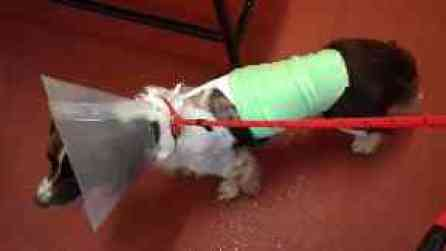 Neglect: Dog was found covered in blistering burn wounds.