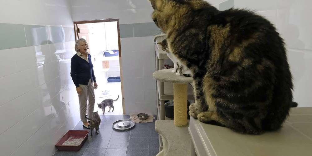 afflux de chats abandonnes sur la