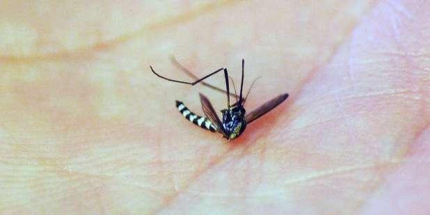Invention: un aspirateur pour piéger les moustiques tigres