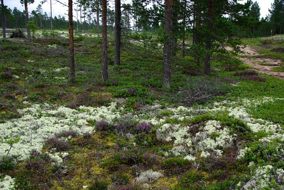 Get tree tips at houselogic. Scandinavian And Russian Taiga One Earth