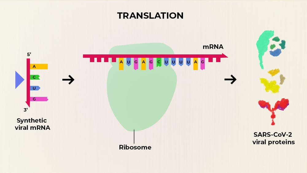 what are the advantages of an mrna