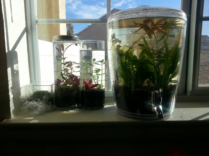 Image result for fish tank on windowsill