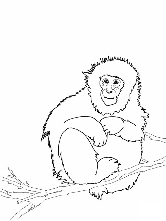 Monkey Template Animal Templates Free Amp Premium Templates