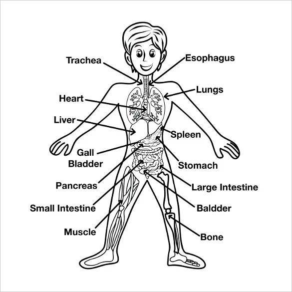 9+ Free Body Diagram - Free Printable Download | Free ...