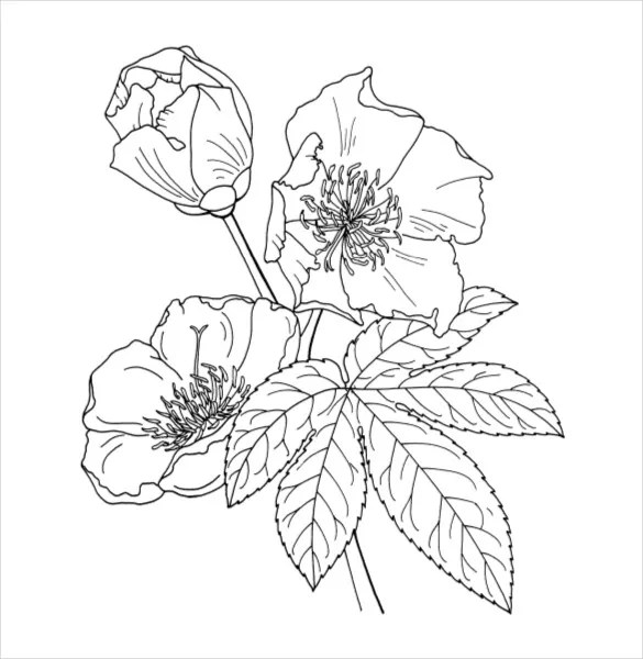 21 Flower Coloring Pages Psd Ai Vector Eps Free Premium Templates