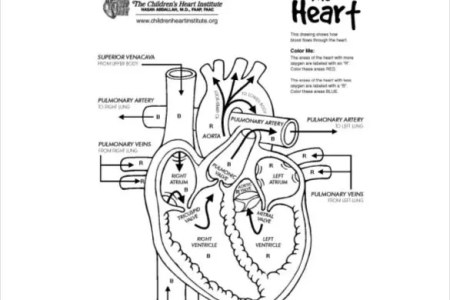Human heart drawing biology path decorations pictures full path pictures plant cell diagram draw it neat how to draw human heart labeled draw a oblique line from right to left biology a beloved nobody heart drawing ccuart Gallery