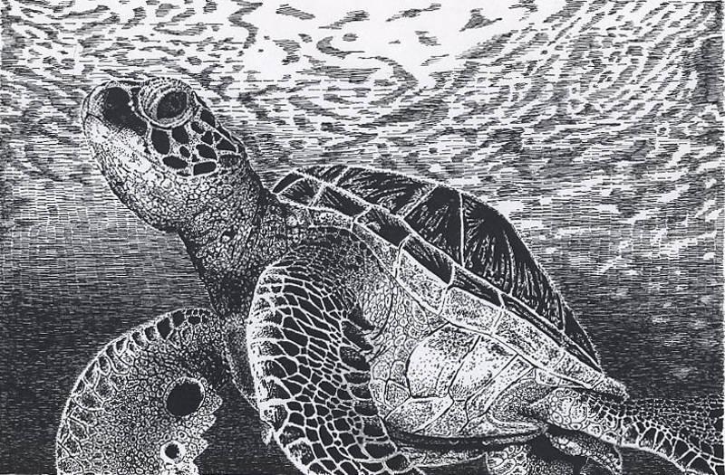Turtle Sea And Black White