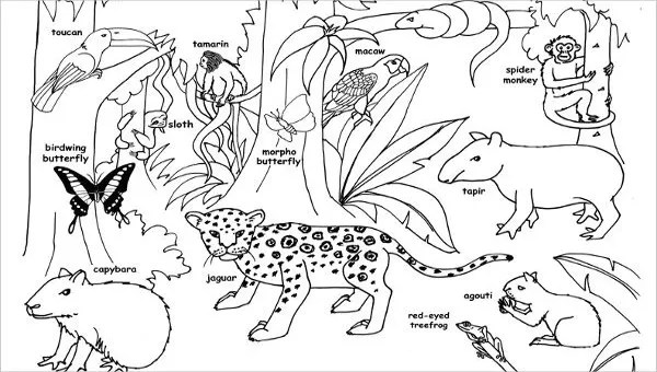 8+ Jungle Coloring Pages - PDF, PNG | Free & Premium Templates | jungle animals coloring pages for kindergarten