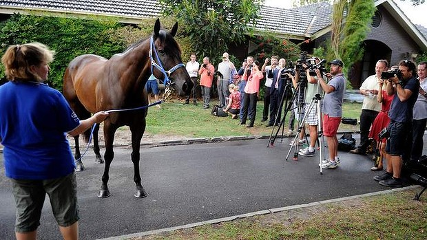 Strapper Donna Fisher with Black Caviar at Caulfield.14th February 2013.Picture Sebastian Costanzo. The Age.
