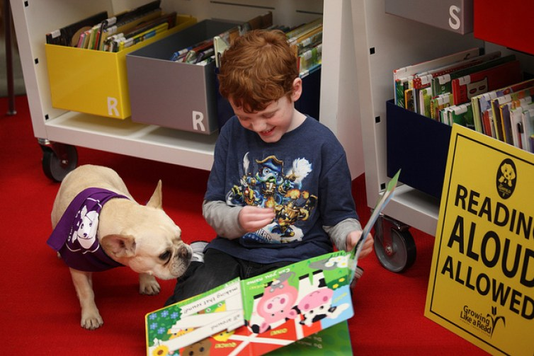 Therapy dogs help students at schools and universities
