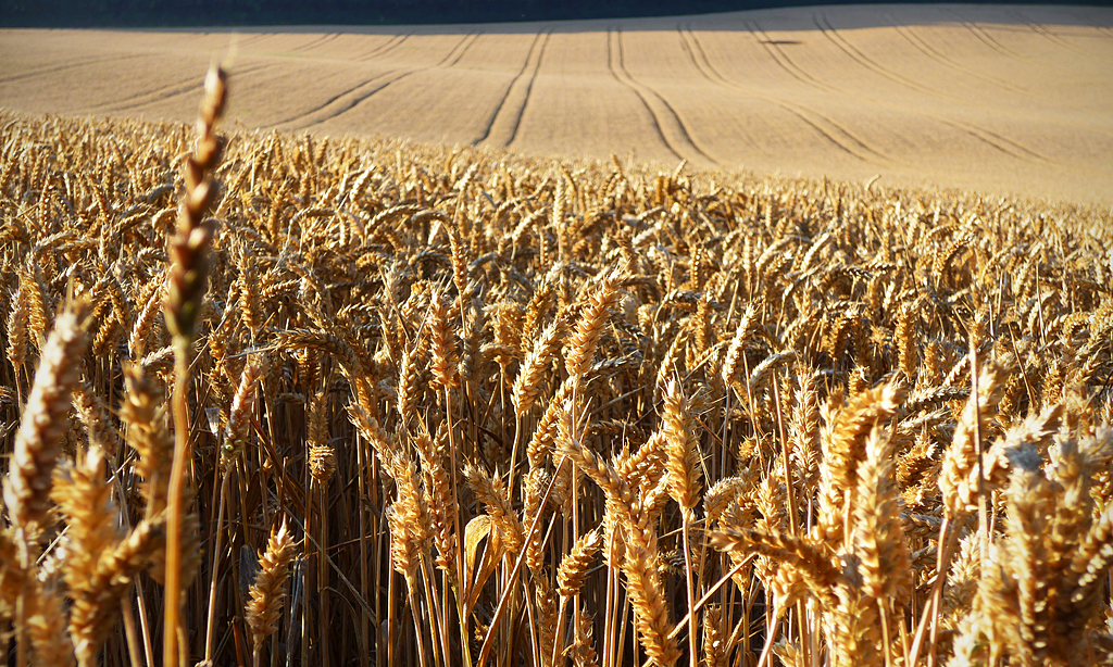 The majority of the wheat flour produced in the UK is also used there. Photo credit: Andrew Gustar/Flickr