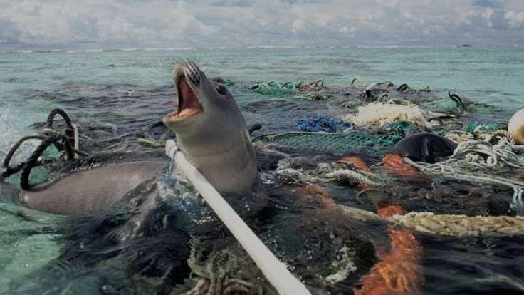 Image result for marine debris gyre