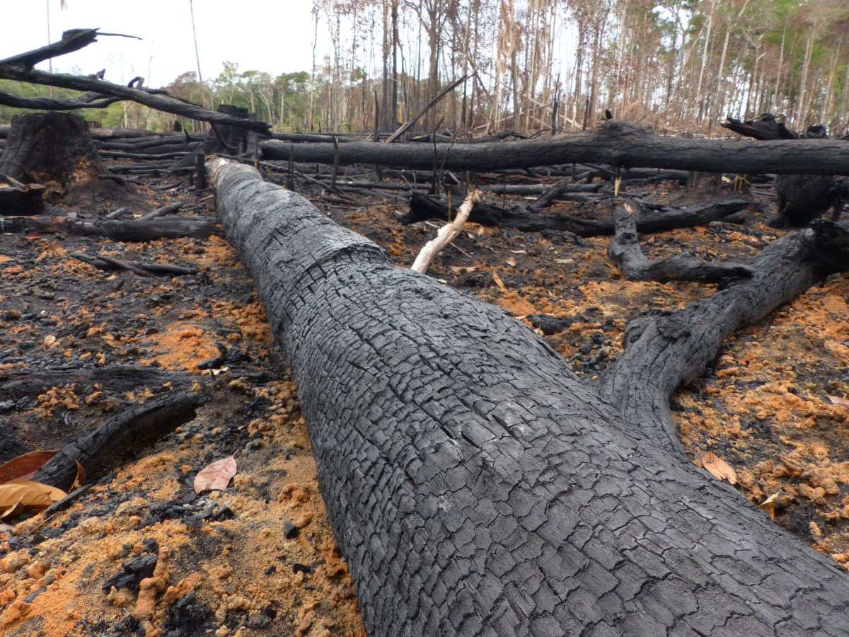 Scientists are very concerned about the loss of biodiversity from such. Amazon Fires Deforestation Has A Devastating Heating Impact On The Local Climate New Study
