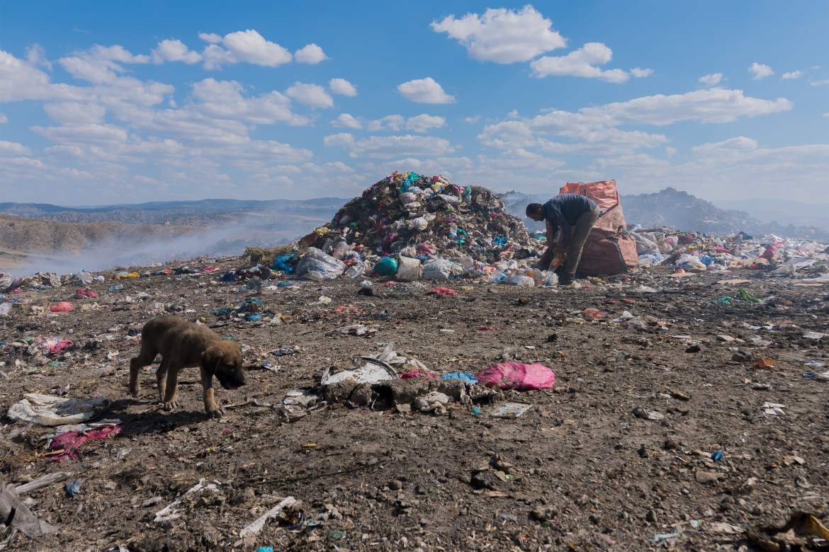A dog picks through a plastic waste dump.