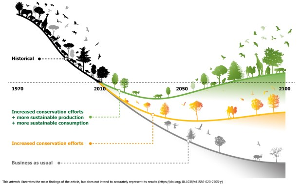 A downward sloping line showing wildlife declines splits into three alternative trajectories, where biodiversity increases, plateaus and crashes by 2050.