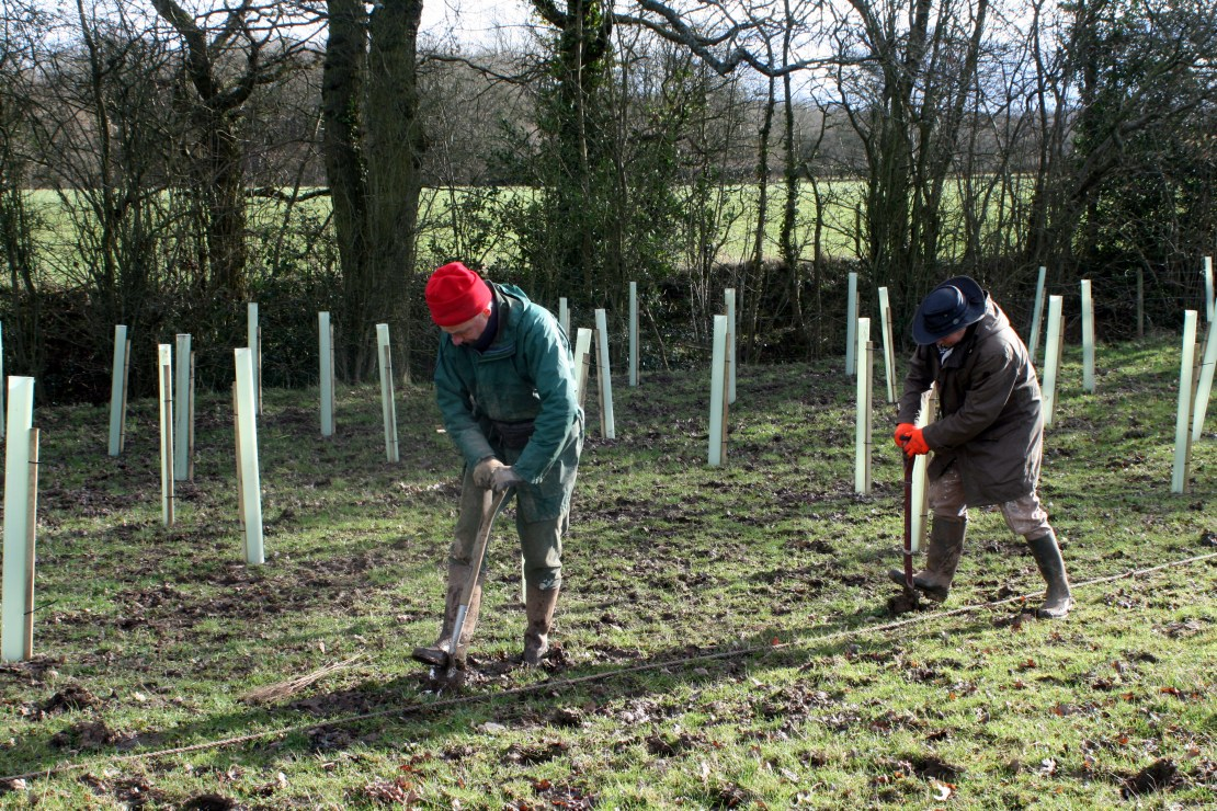 Two people plant trees in field.