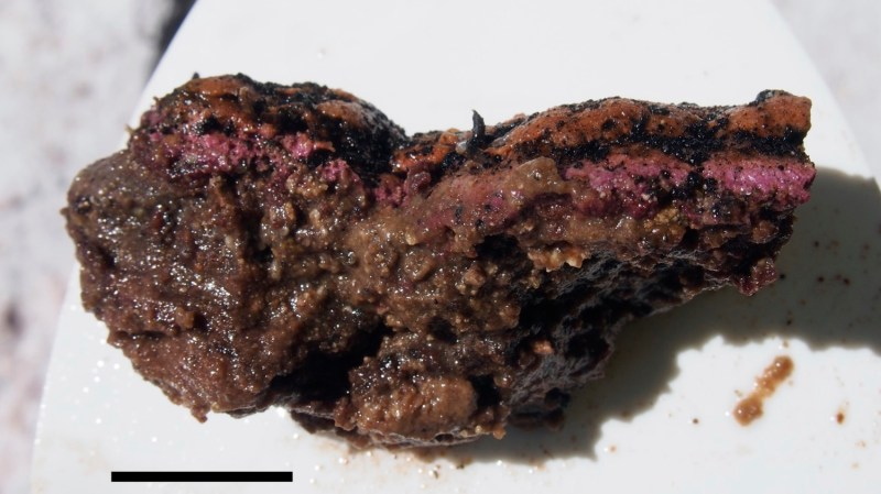 A purple and brown clump of microbes sitting on a white background.