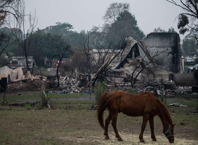 A horse grazes in front of bushfire debris.