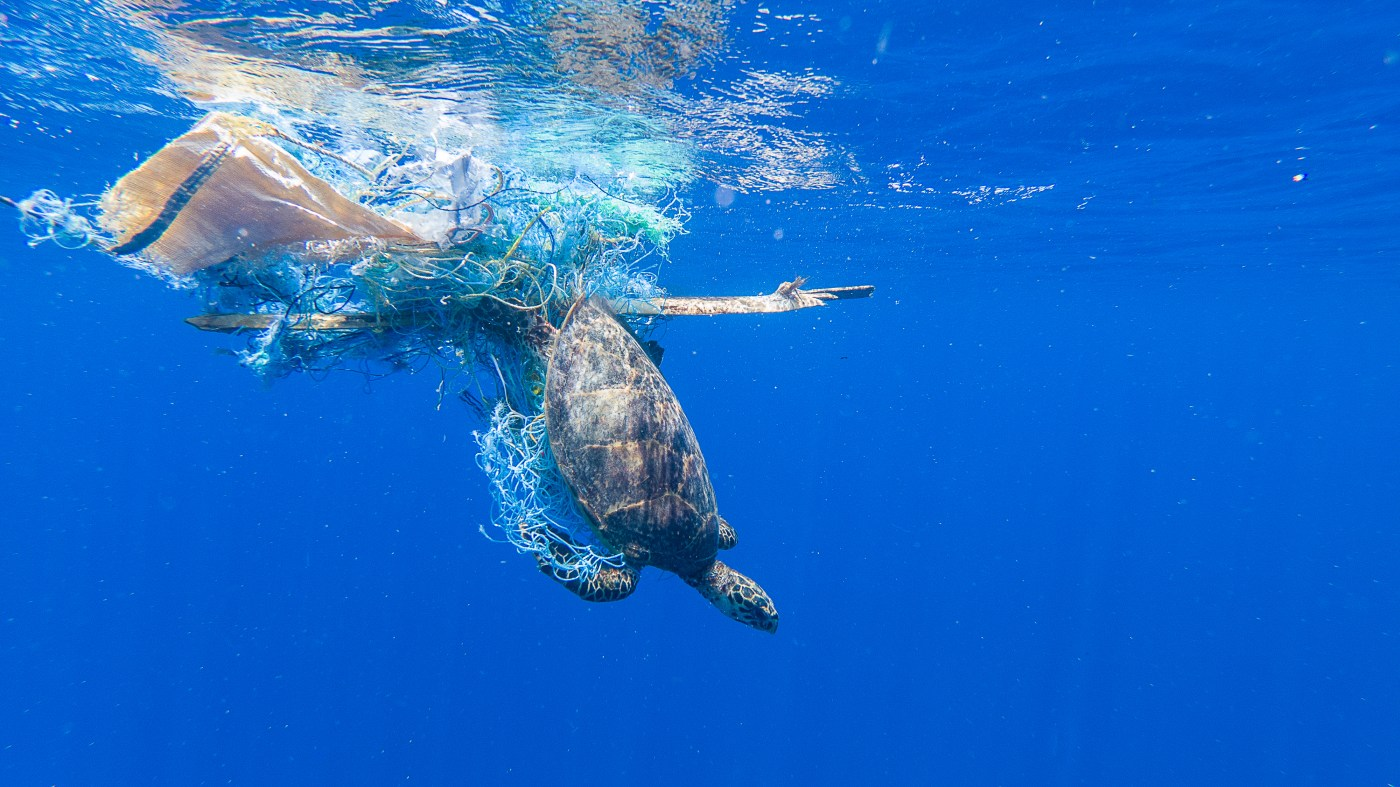 A turtle tangled in a fishing net