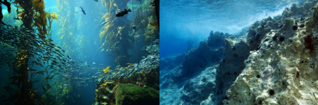 Left: underwater kelp forest full of fish. Right: rocky, barren reef with sea urchins.
