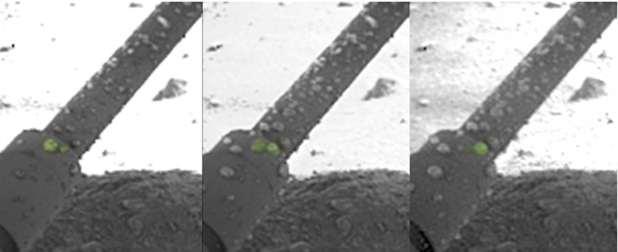 Saline droplets on Mars lander legs