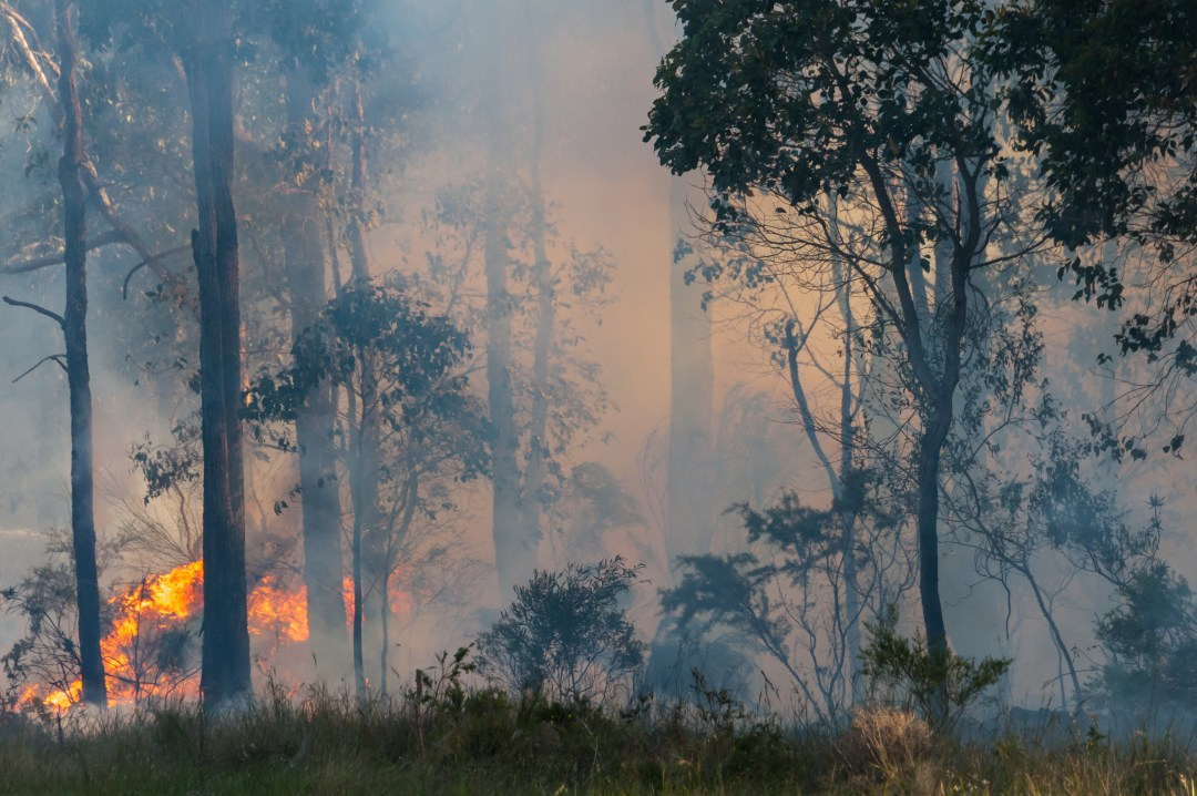 Smoke and fire in the understory of a eucalyptus forest