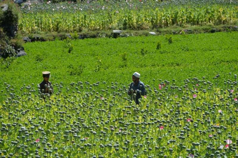 Two men in a very green field.