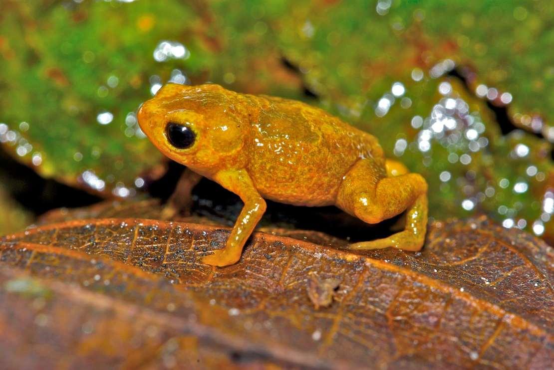 Tiny bright orange toad sits on leaf