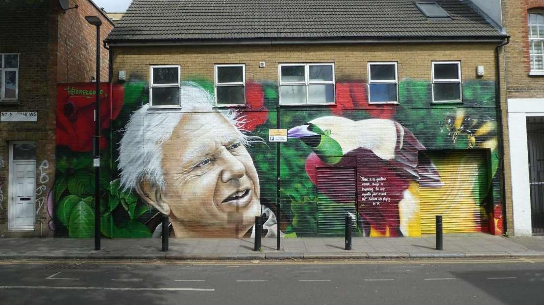 Street art of David Attenborough and a colourful bird
